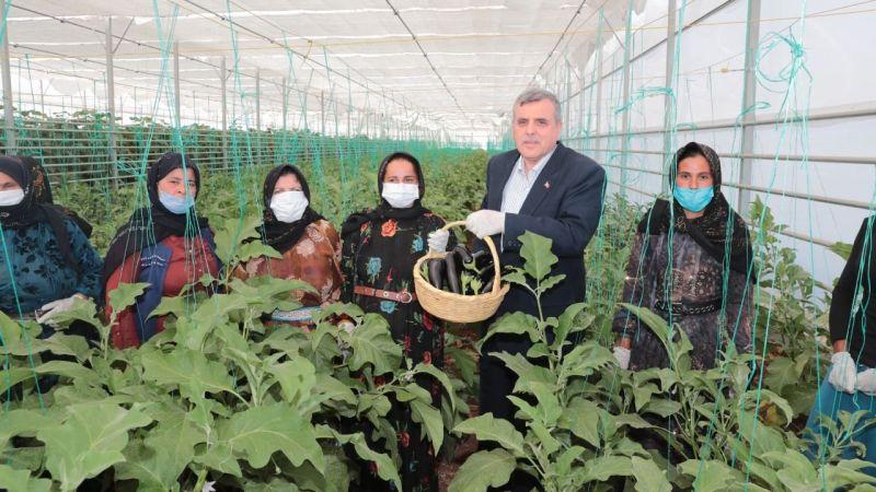 Urfa'da 30 aileye istihdam: 'Toplum Temelli Seracılık' projesinde ilk hasat yapıldı!