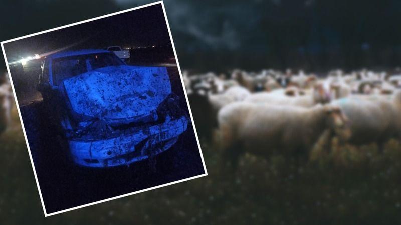 Otomobil koyun sürüsüne daldı! Koyunlar telef oldu