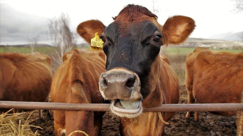 Bayramda elde kalan hayvanlar ne olacak? Bakan fiyatları duyurdu