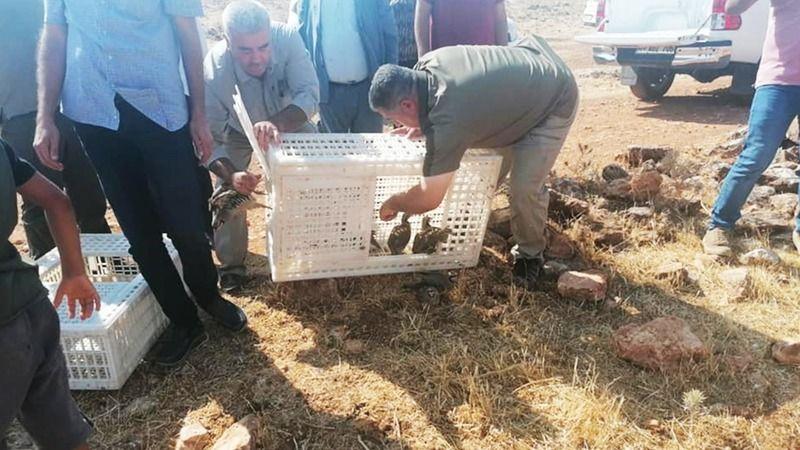 Urfa'daki bölgede çekirge sayısı artıyor! Yeni önlem