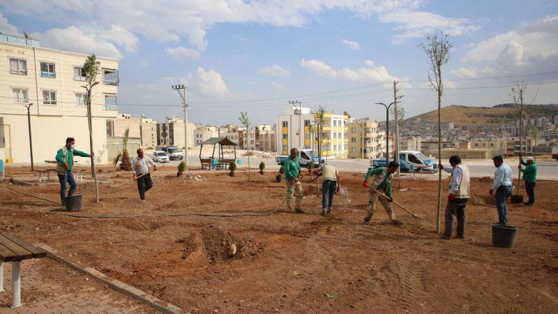 Haliliye'de 800 gül ile 1100 ağaç dikildi!