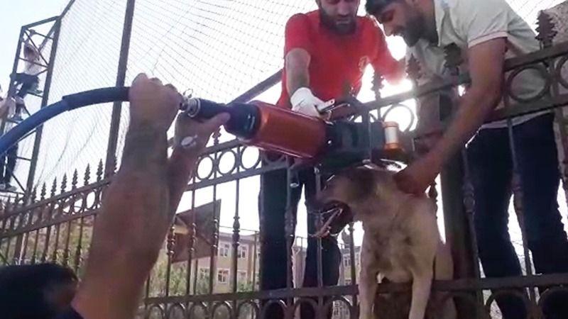 Parmaklıklara sıkışan köpek kurtarıldı