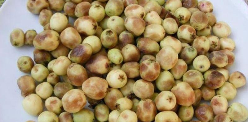 Murt Meyvesinin Faydaları, murt nedir?