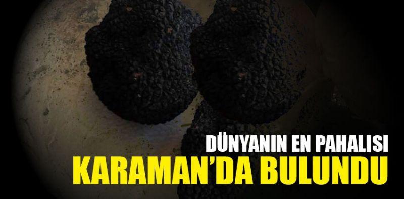 Dünyanın en pahalı Mantarı Karaman'da bulundu