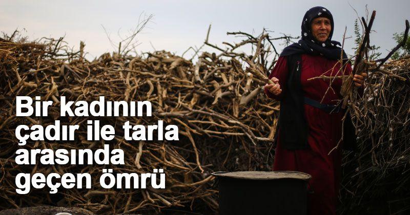 Tarım işçisi kadının çadır ile tarla arasında geçen ömrü