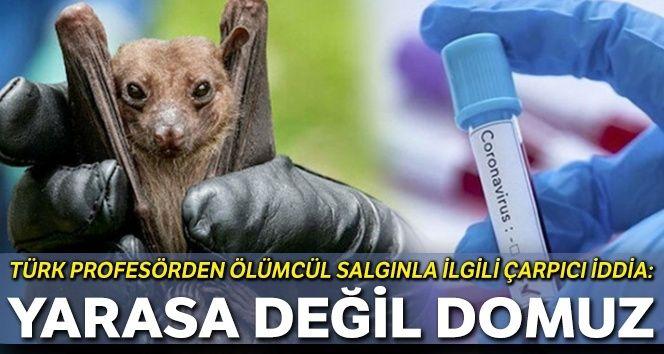 Türk profesörden çarpıcı iddia: Yarasa değil domuz