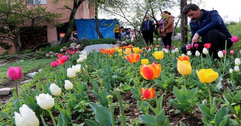Hatay'da kadın çiftçilerin ektiği laleler çiçek açtı