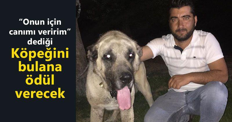 Kayıp köpeğini bulana ödül verecek