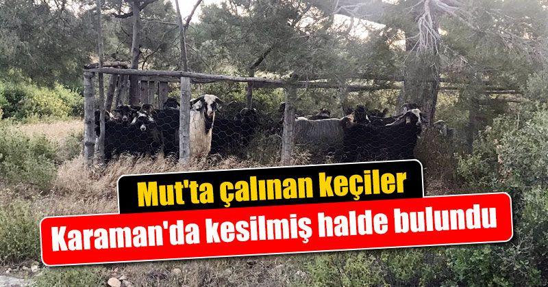 Mut'ta çalınan keçiler Karaman'da kesilmiş halde bulundu