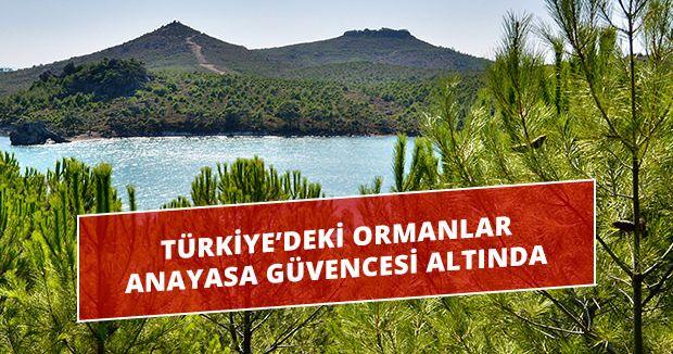 Türkiye'deki ormanlar Anayasa güvencesi altında