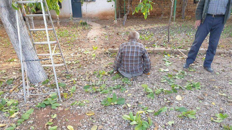 80 yaşında ceviz ağacından düştü