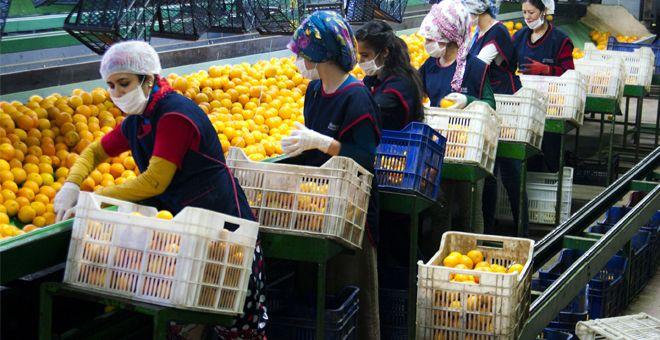 Yaş meyve ve sebze ihracatında hedef yeni pazarlar