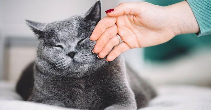 Türkiye'de Popüler 5 Kedi Cinsi