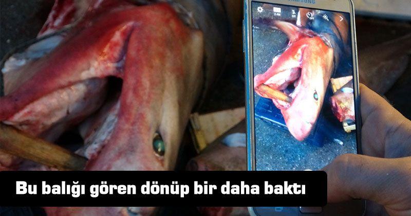 Mersin açıklarında köpek balığı yakalandı