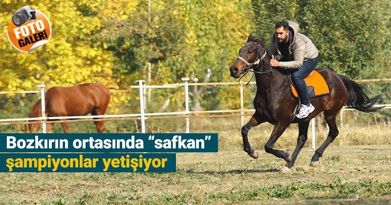 Bozkırın ortasında şampiyonlar yetiştiren haralar ziyaretçilere at sevgisini aşılıyor