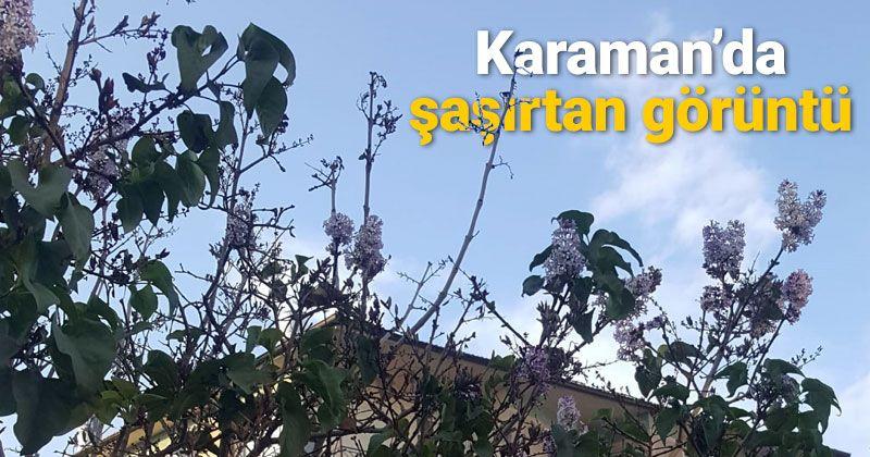 Spring Flowers Bloom in Mid-November in Karaman