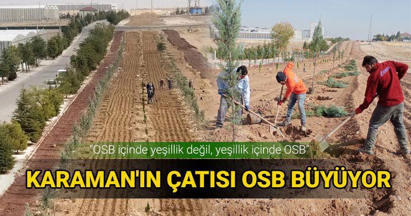 Not greenery in OSB, but OSB in greenery