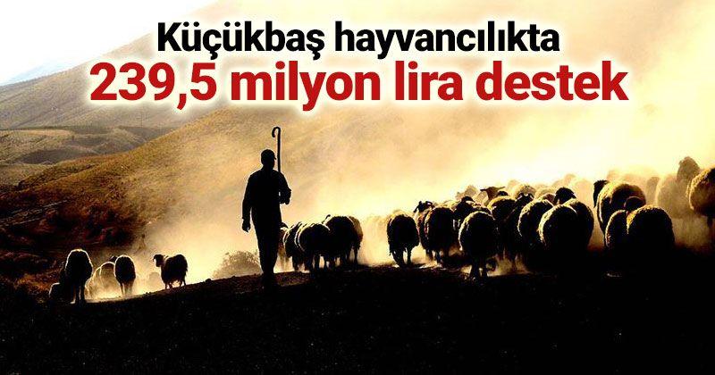 Küçükbaş hayvancılıkta 239,5 milyon lira destek