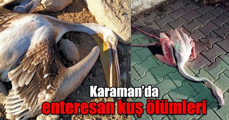 Karaman'da enteresan kuş ölümleri