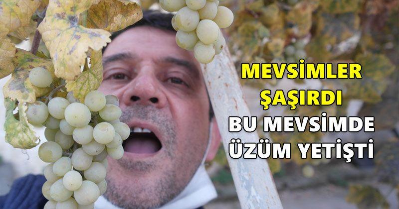 Bu mevsimde üzüm yetişti