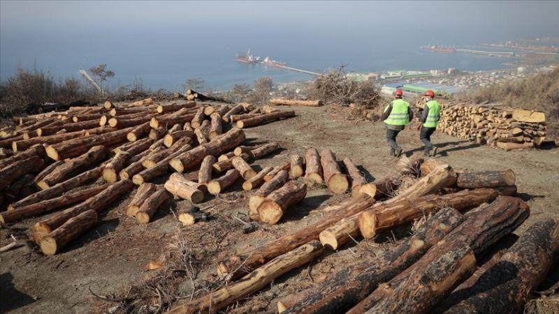 Yanan ormanlar tahtacıların zorlu mesaisiyle ağaçlandırma için hazırlanıyor