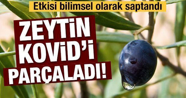 Zeytin Kovid'i parçaladı