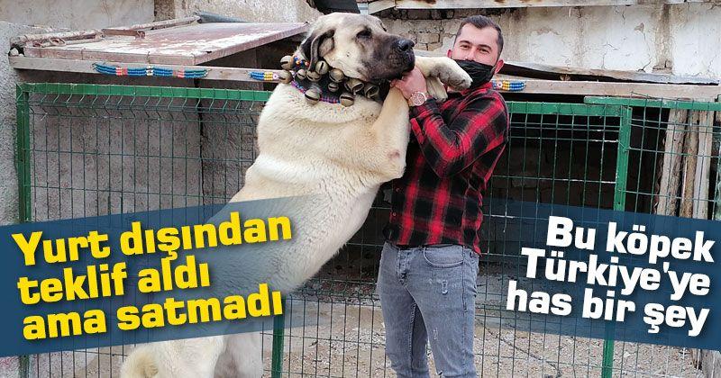 """""""Bu köpek milli bir değerimiz, Türkiye'ye has bir şey"""""""