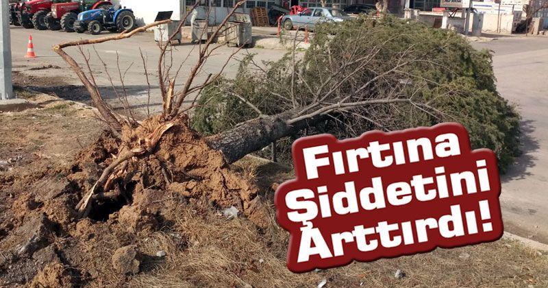 Karaman'daki fırtına ağacı kökünden söktü