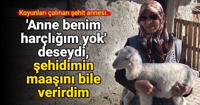 Ereğli'de şehit annesinin koyunları çalındı