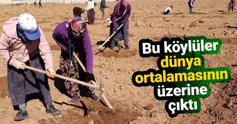 Karalgazi köylüleri dünya ortalamasının üzerine çıktı