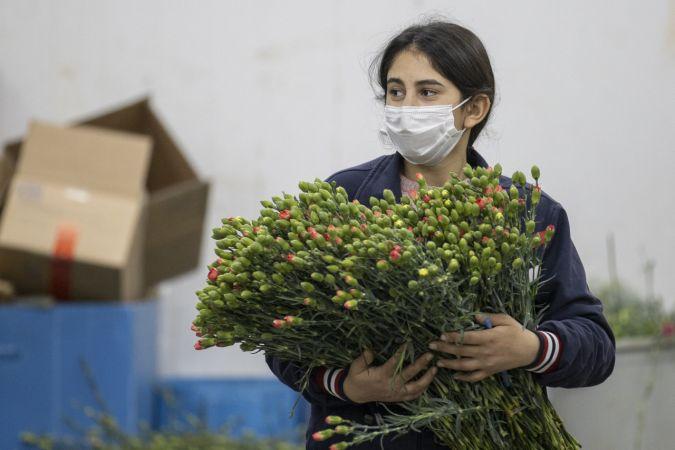Çiçek sektörü ihracatta yüz güldürüyor