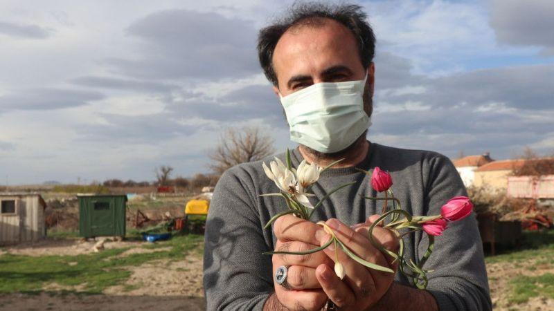 Bilim insanları, Karaman'da bulunan lalenin türünü araştırıyor