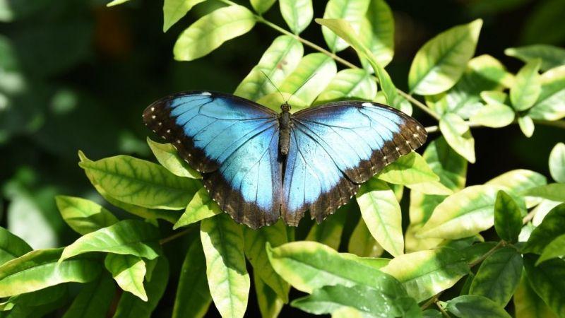 Konya Tropikal Kelebek Bahçesi kapılarını ziyaretçilere açtı
