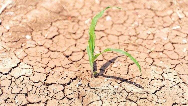 Kuralıktan etkilenen çiftçilere bu destekler verilecek