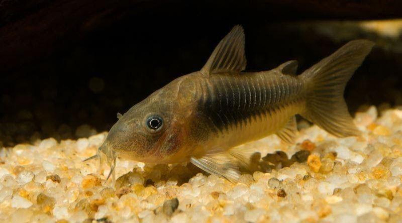 Balık Ürünleri (Yem, Akvaryum/Fanus, Aydınlatma) Alırken Nelere Dikkat Edilmeli?