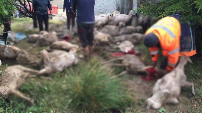 Sele kapılan 64 koyun telef oldu