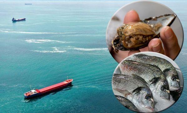 Müsilajın balık ve midyeye etkisi var mı?