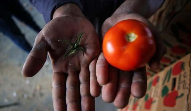 İsrail'den Gazzelilere 'sapsız domates' zulmü