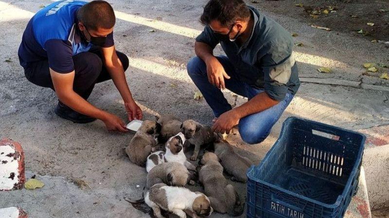 Çalılıklar arasında mahsur kalan yavrular kurtarıldı