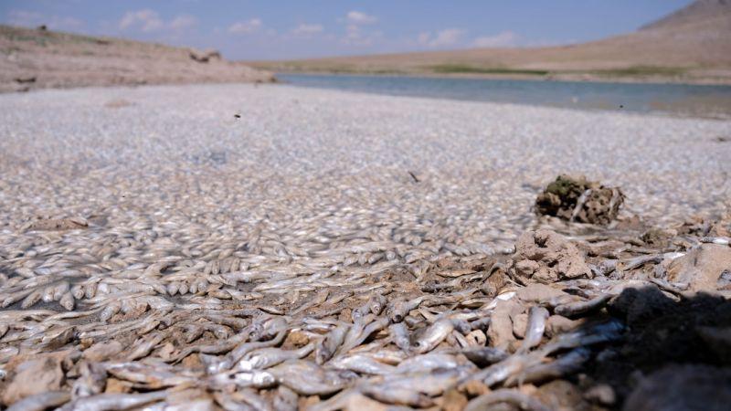 Konya'da sular çekildi, balıklar öldü