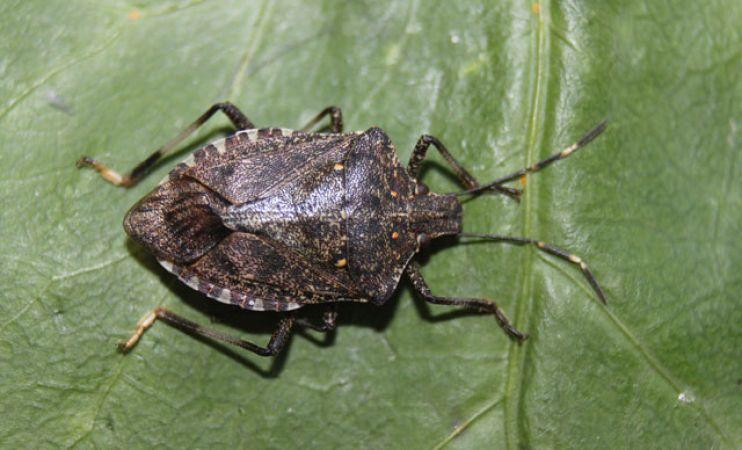 E-ticarette böcek ilacı talebi arttı
