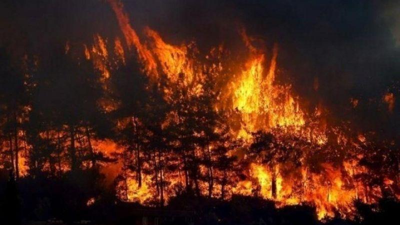 Tarım ve Orman Bakanlığı: 3 ilde 7 yangın devam ediyor
