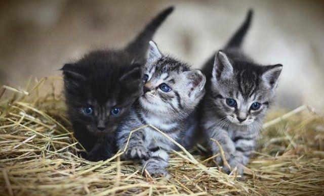 İngiltere'de ölümlere yol açan gizemli kedi hastalığında zehirli mamadan şüpheleniliyor