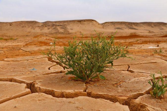 """""""İklim değişikliğini sınırlandırmak için derhal harekete geçilmeli"""""""