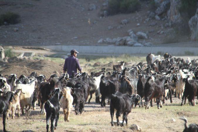Konya'ya göç Manavgatlı besicinin hayvanlarını yanmaktan kurtardı