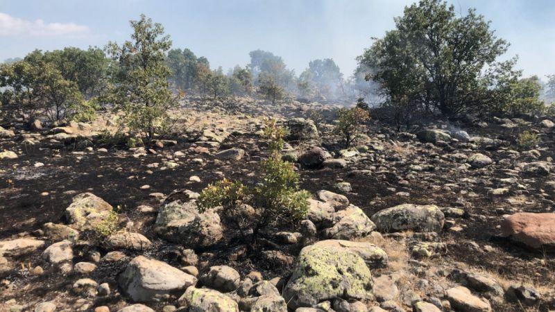 Konya'da makilik alanda yangın