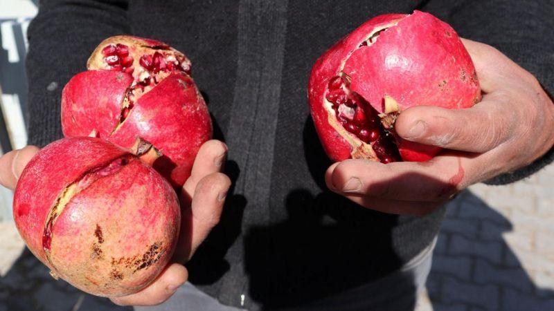 Dr. Altıntop: Meyveleri gerekirse sabunla bile yıkayabilirsiniz