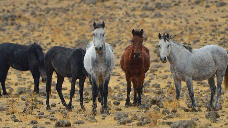 İzinsiz yılkı atı toplayan yabancı uyruklu 4 kişi yakalandı