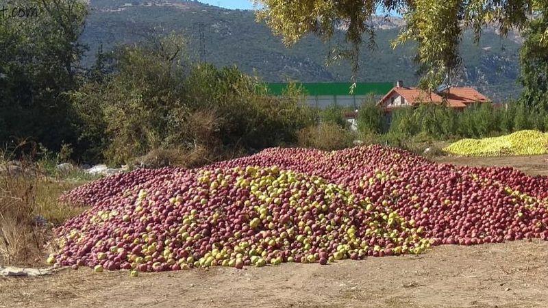 Iskarta elma fiyatı arttı