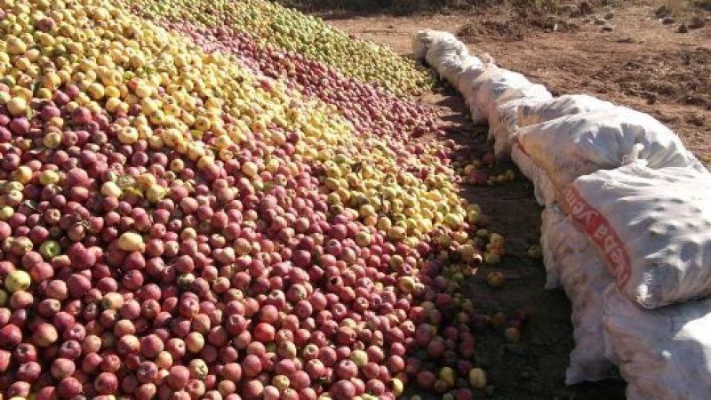 Iskarta elma fiyatı yeniden arttı